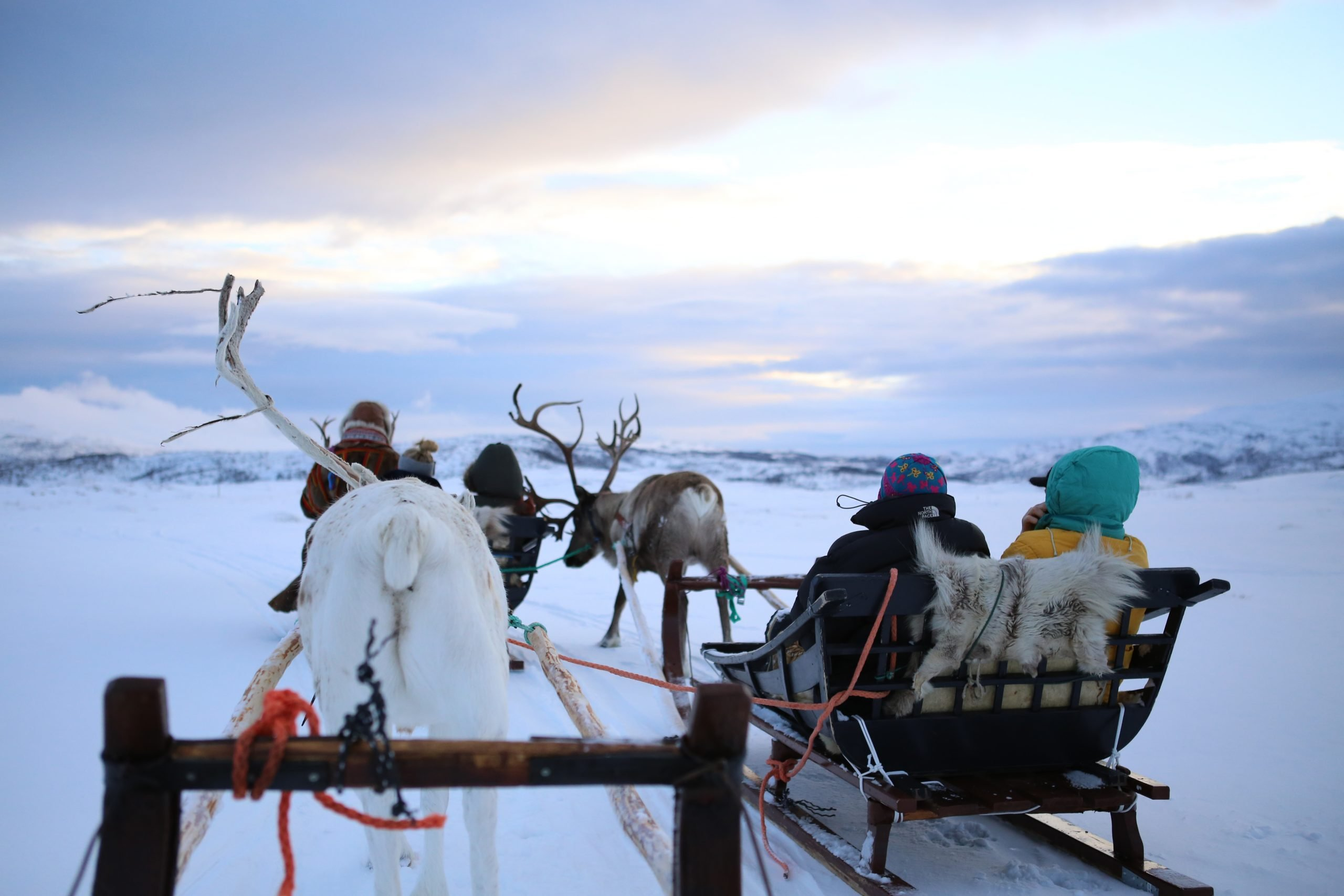 Reindeer Sledding with Tromsø Friluftsenter