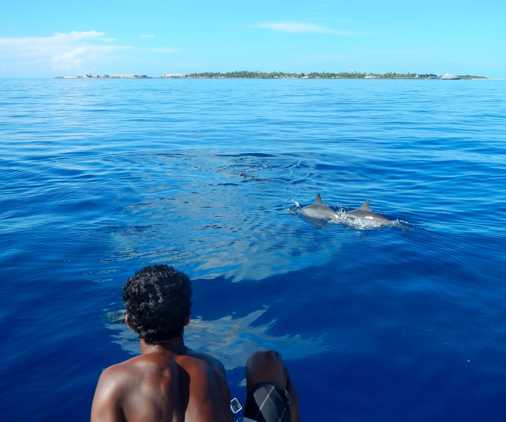 Some dolphins swimming by our boat!