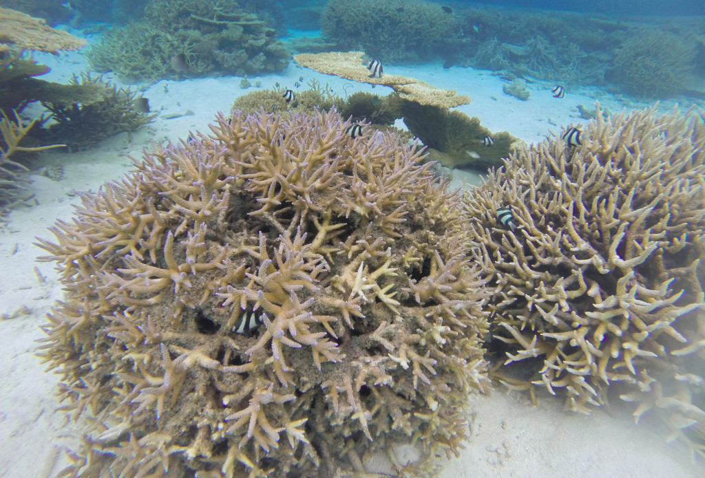 Snorkeling adventures in the Maldives