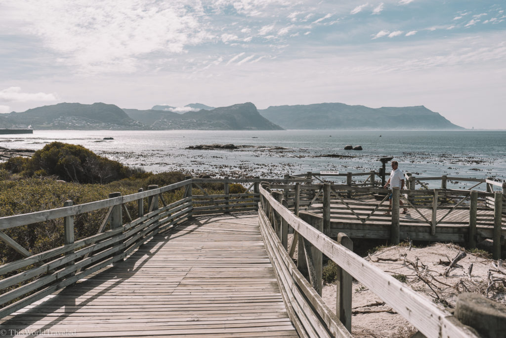 There is a well kept boardwalk that you can follow all over the area to see the penguins at Boulder's Beach!