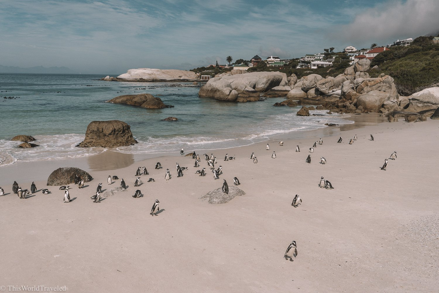 The African Penguins can be seen frolicking all over the beaches at Boulders Beach near Cape Town.