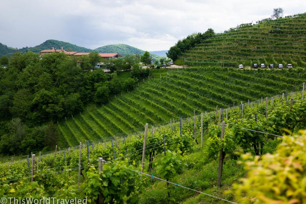 Prosecco Road.  Wine Tasting in Valdobbiadene