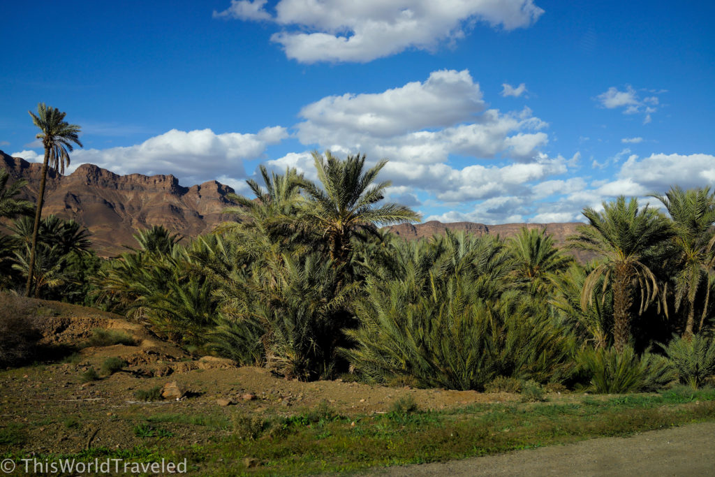 An Oasis we drove by during our drive through the Atlas Mountains in Morocco
