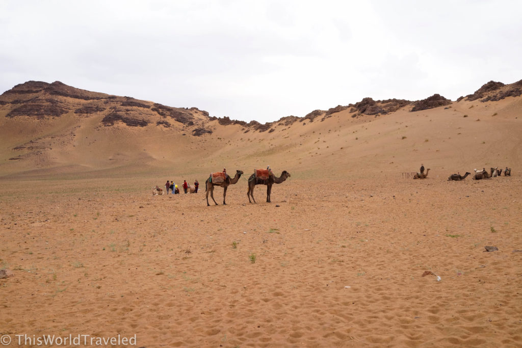 Our camels ready for the morning trek back to our car in Morocco