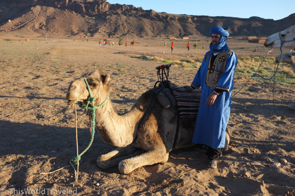 Meeting our camels before our camel trek in Morocco