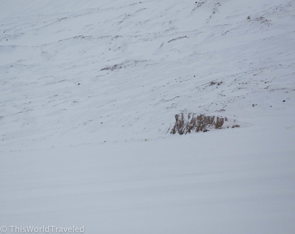 The polar bear we saw at a safe distance in Svalbard