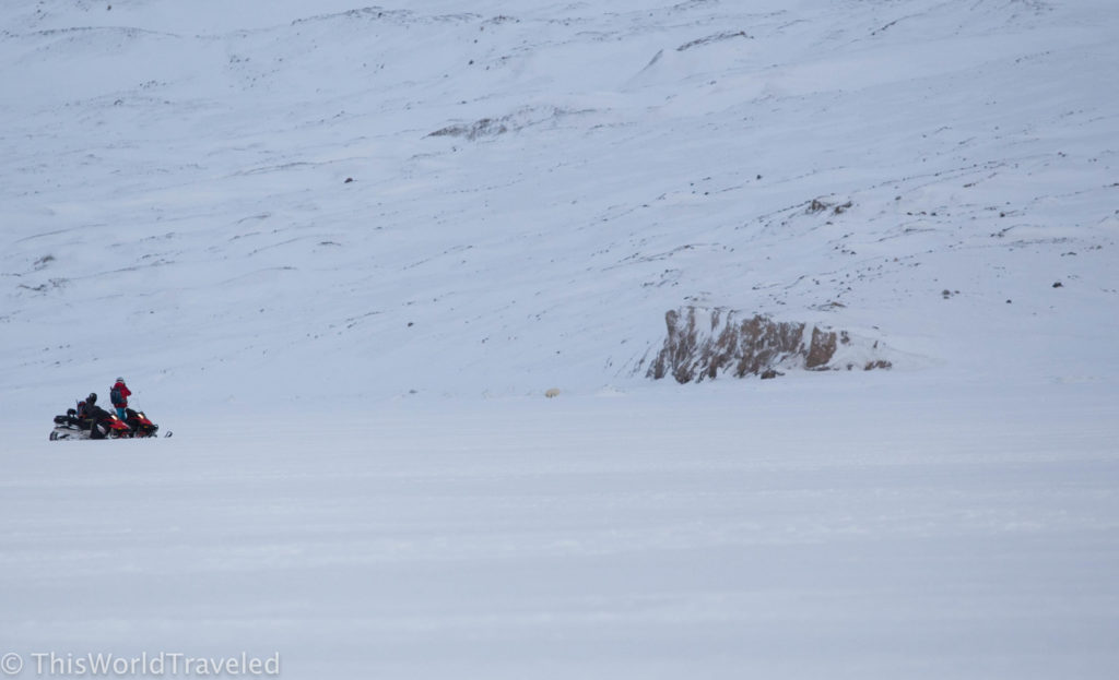 Our polar bear sighting near Templefjorden in Svalbard