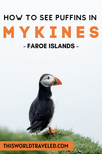 How to See Puffins on Mykines in the Faroe Islands