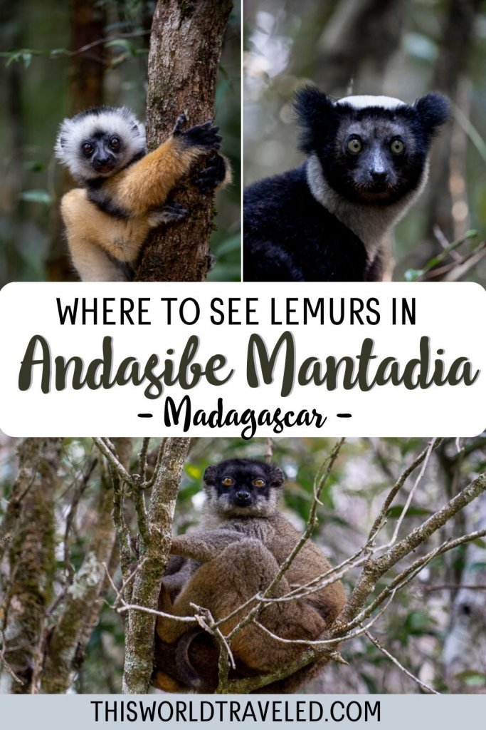 Where to see lemurs in Andasibe Mantadia Madagascar