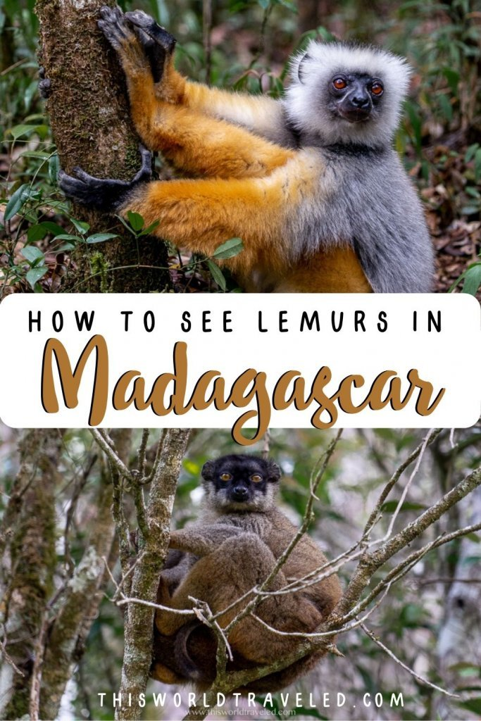 How to see lemurs in Madagascar: A Complete Guide