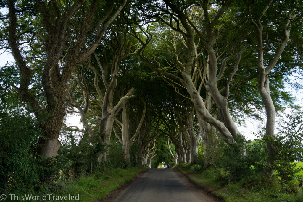 The eerily beautiful opposing rows of beech trees called The Dark Hedges in Northern Ireland