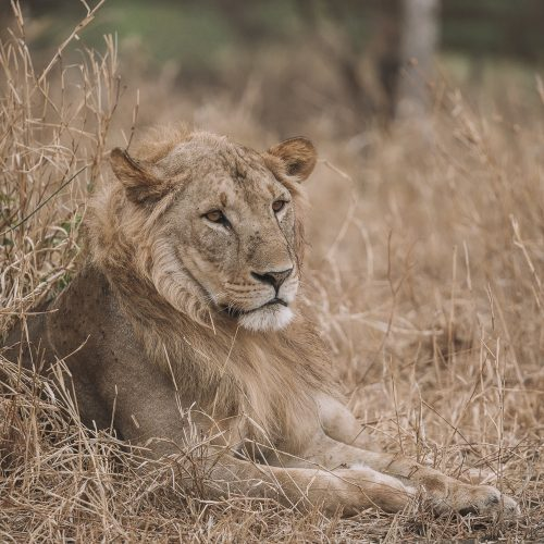 Packing the right camera gear for your safari is essential to capturing the perfect photo.