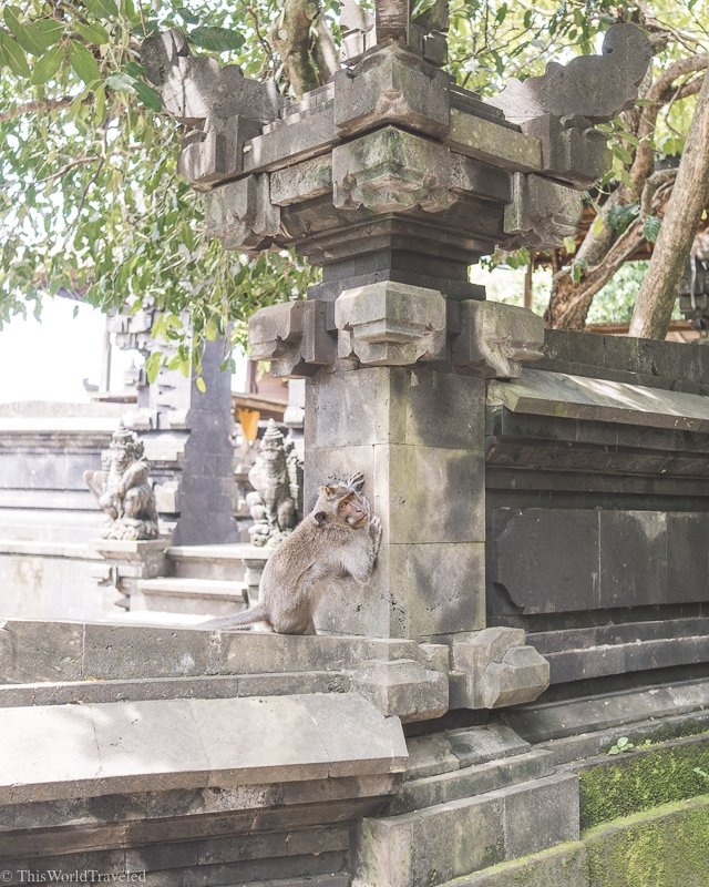 There are many monkeys all over Bali. You will find them at the temples and even at the beaches.