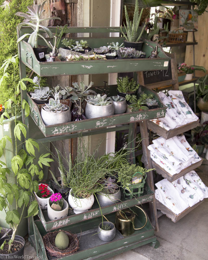 The cute succulents for sale at Nest, a local boutique shop in Eastsound, Orcas Island, Washington, USA