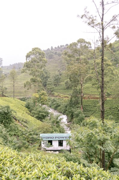 The Mackwoods tea plantation in Nuwara Eliya is one of the most famous ones in that region to visit.