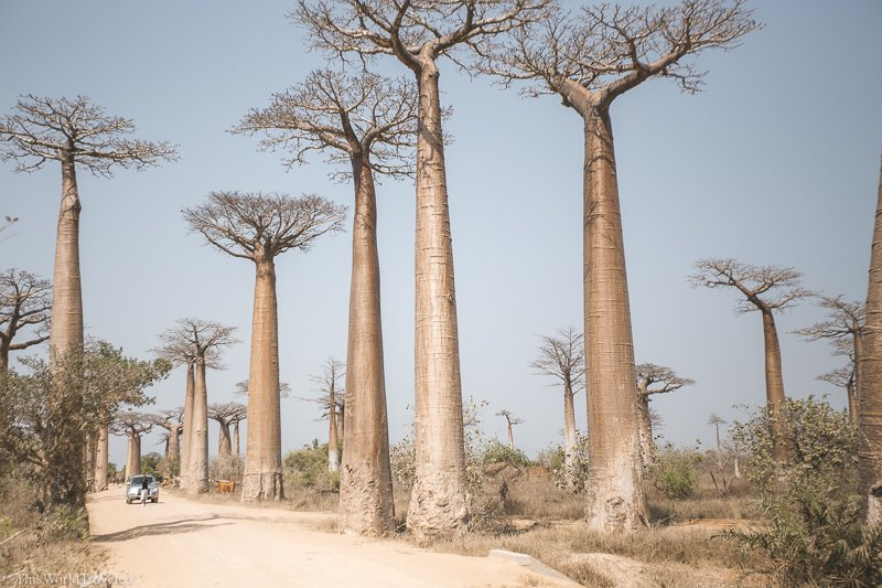 The Avenue of the Baobabs is one of Madagascar's most photographed locations. These tree-lined dirt road can be seen on the west side of the country and is absolutely worth a visit!