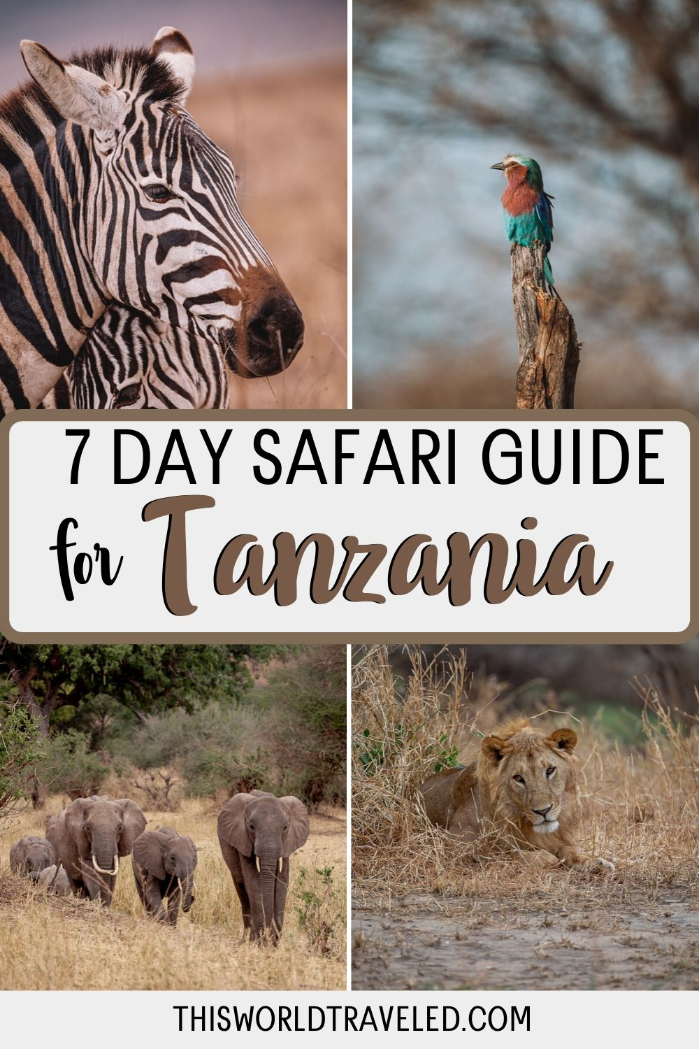 TA 7 Day Safari Guide to Tanzania with photos of a zebra, elephants and a lion from Africa