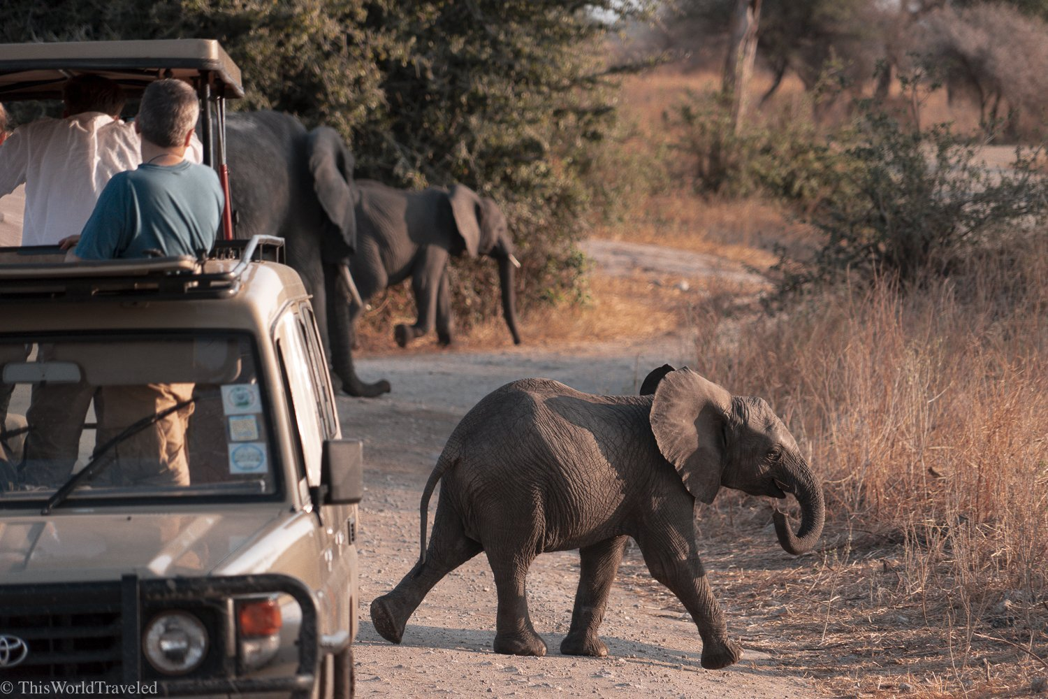 The Ultimate Guide to Going on Safari in Tanzania