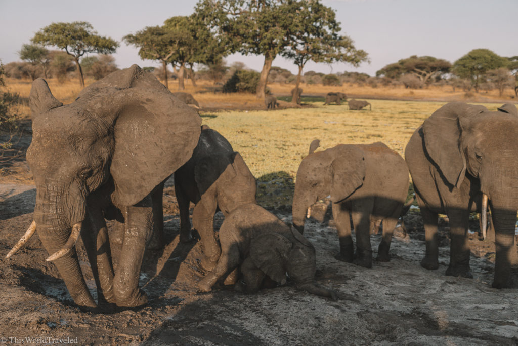 The elephants in Tanzania were so close to our truck!