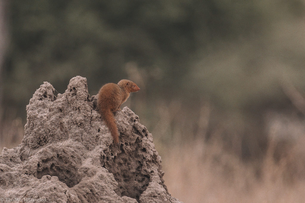 Even the tiny animals are fun to spot on a safari in Tanzania