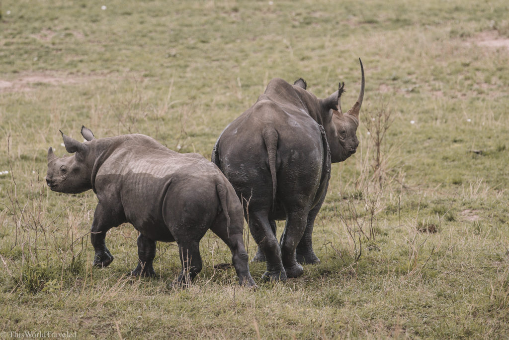 The mother and baby rhinoceros that we saw in the Northern Serengeti in Tanzania