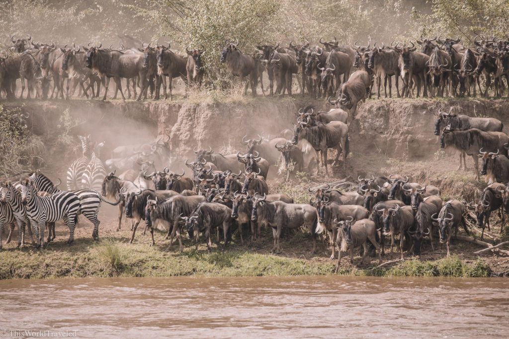 The wildebeest migration is one of the highlights of visiting Tanzania