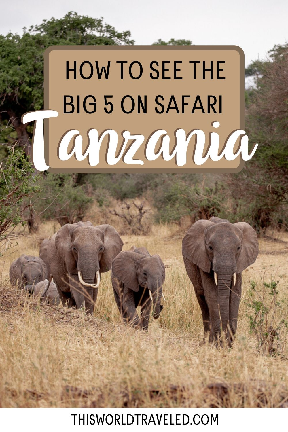 How to see the big 5 on safari in Tanzania with a picture of elephants