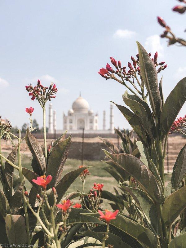 view of the taj mahal peeking through pink flowers in a garden