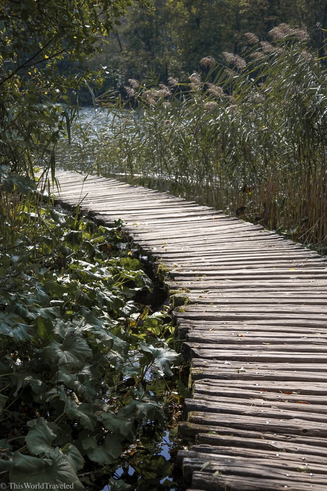 A boardwalk in a waterfall park surrounded by greenery