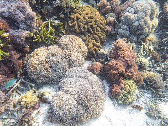 Siaba Island for snorkeling in Komodo National Park