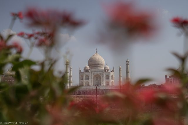 View of the Taj Mahal through flowers in the Mehtab Bagh Gardens