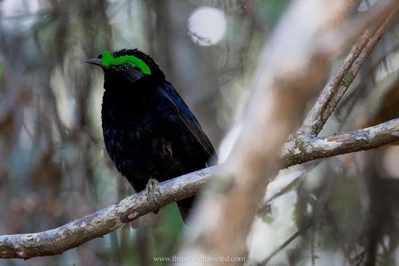 Unique bird species in Madagascar