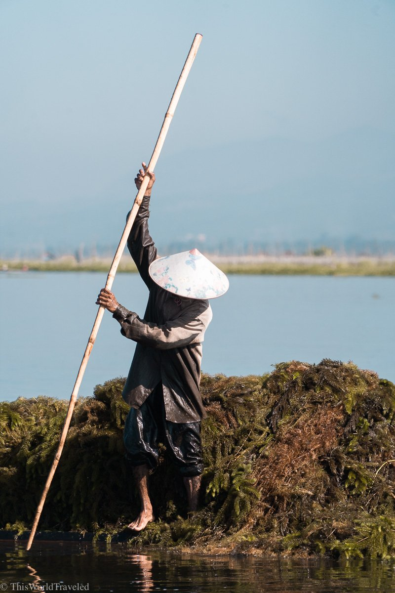 A local man collecting algae for the floating garden in Inle Lake