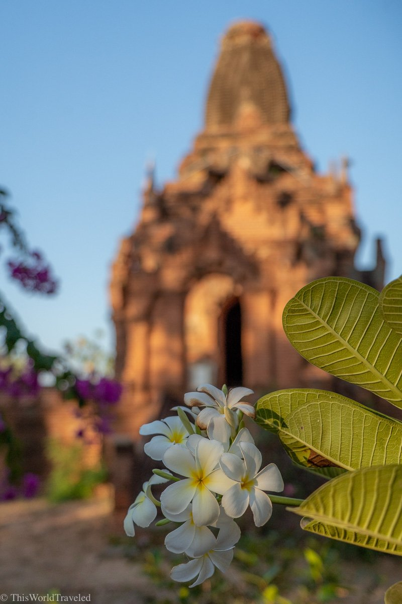 A blue and yellow flower in front of the temple in Bagan, Myanmar