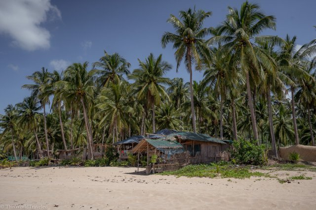 The tall palm trees and beach huts at Nacpan Beach in El Nido