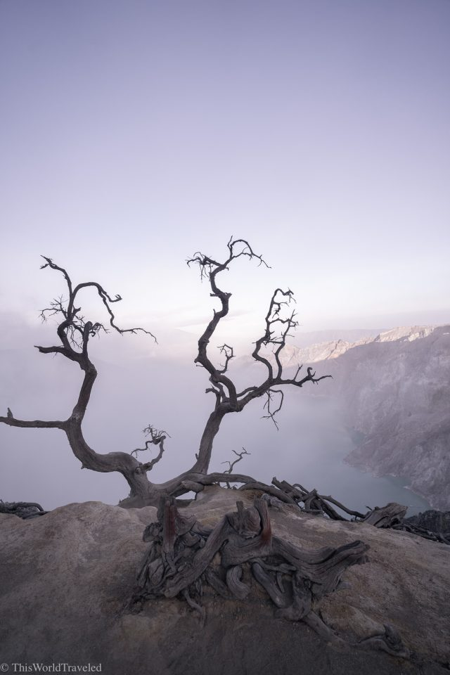 Barren looking trees at the Ijen Crater in Java
