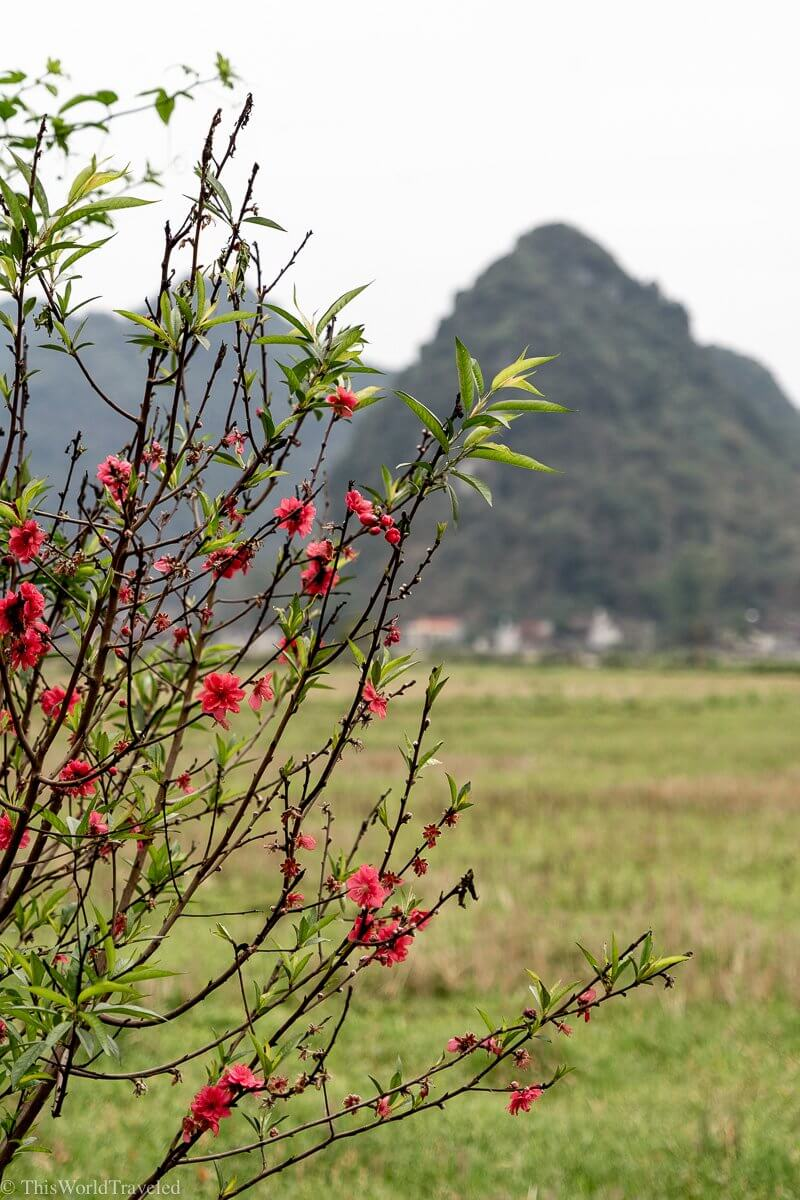 View of the Bac Son Valley from inside the valley in Vietnam