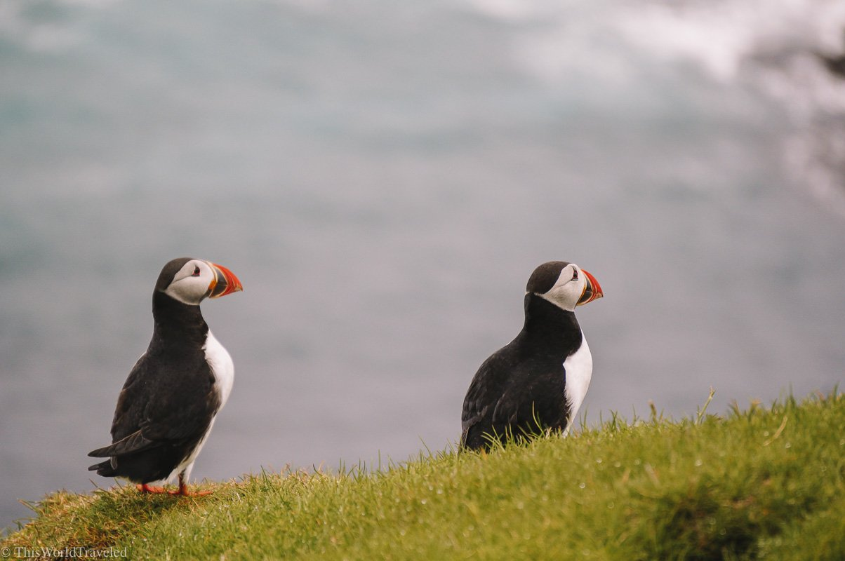 Puffins on the island of Mykines
