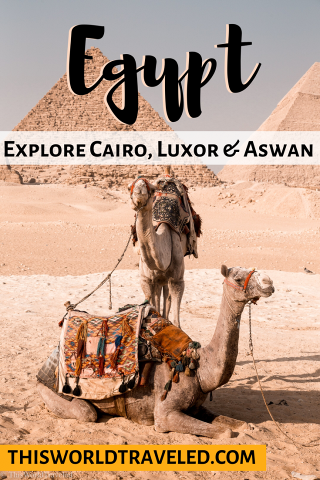 View of the camels in front of the Great Pyramids of Egypt in Cairo