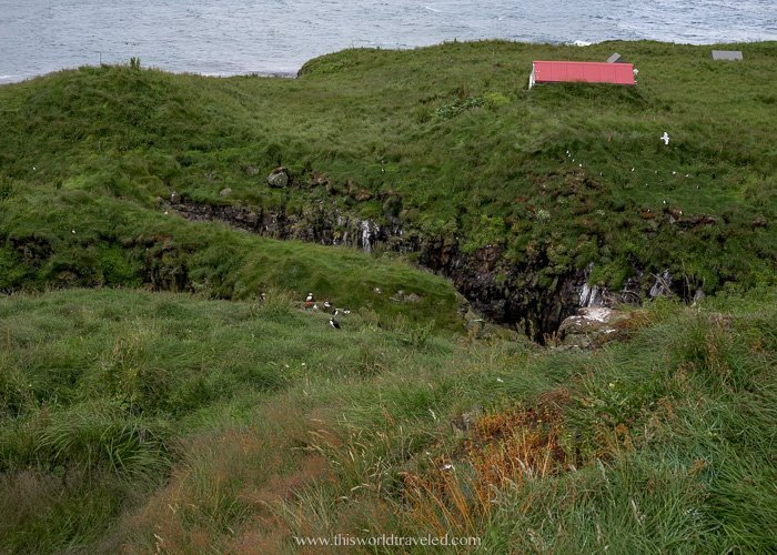 You can see lots of puffins from the wooden viewing decks at Borgarfjörður eystri