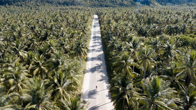 The main road in Siargao Island, Philippines that is lined with coconut palm trees