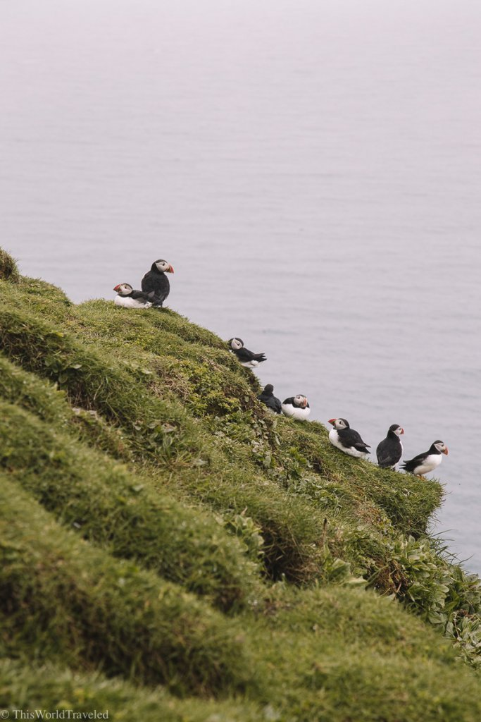 Puffins perched on the edge of the cliff on Mykines in the Faroe Islands