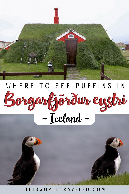 Where to see puffins in Borgarfjörður eystri, Iceland