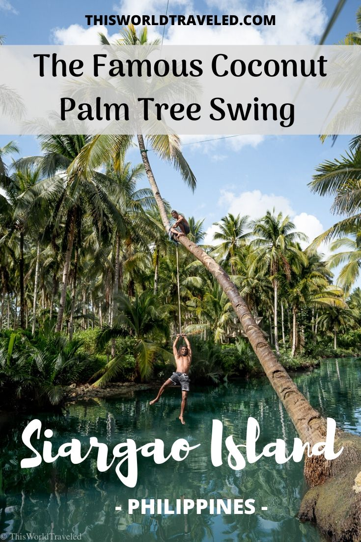 Guy swinging from the coconut tree at the Maasin River Swing in Siargao Island