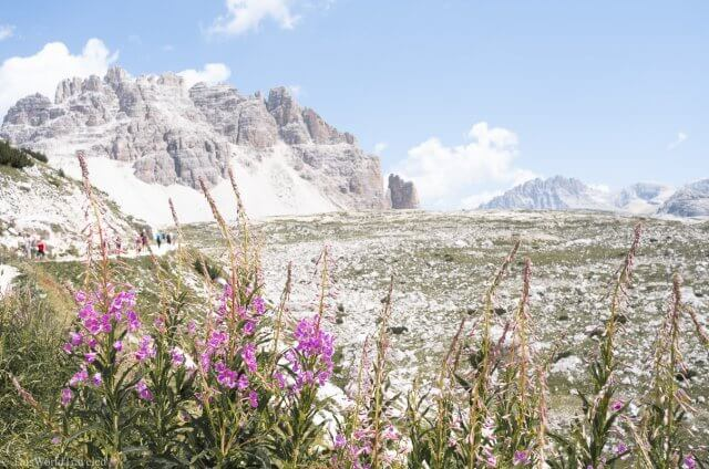 Spring flowers at Tre Cime in the Italian Dolomites