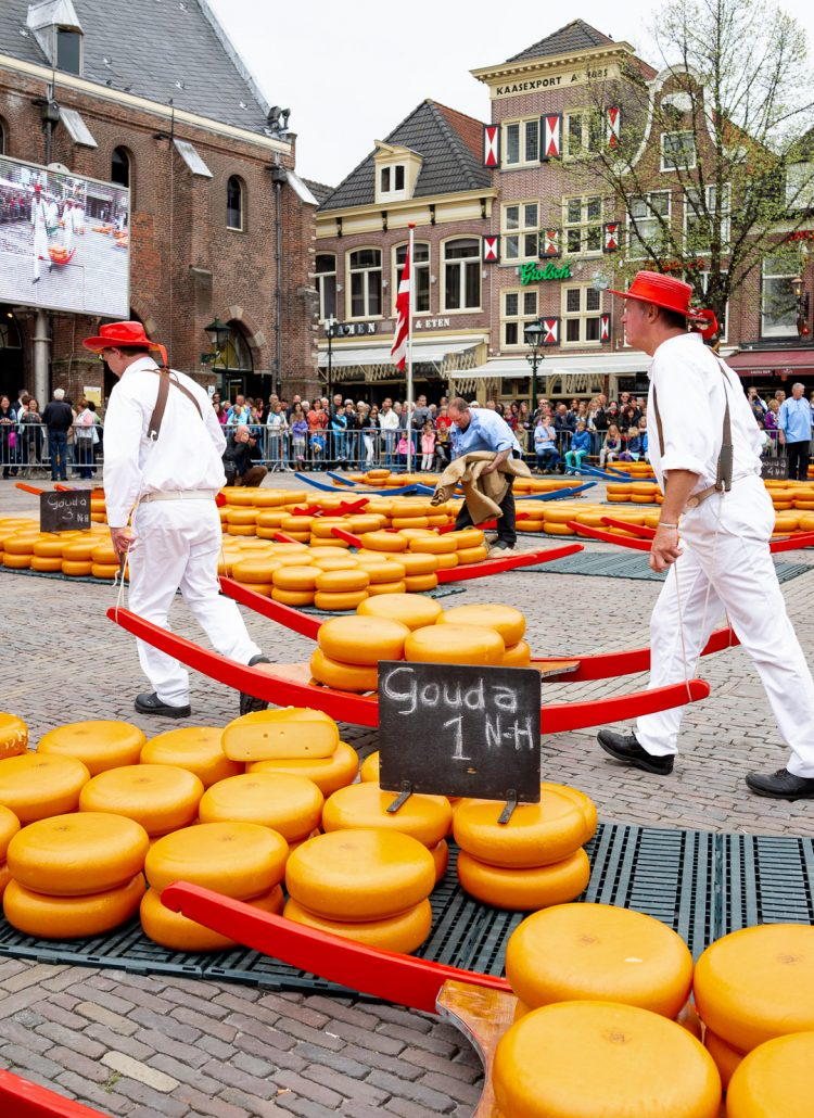 Watching the weighing of the cheese wheels at the market in Alkmaar, the Netherlands