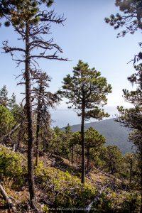 The Douglas Fir trees lining the mountain in Moran State Park on Orcas Island, Washington