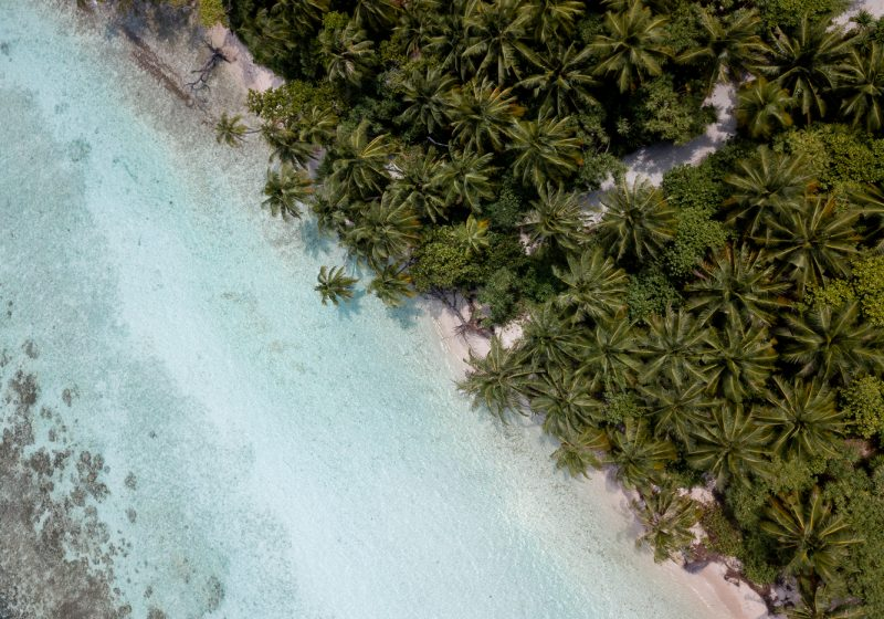 Palm trees near the beach at Omadhoo island in the Maldives