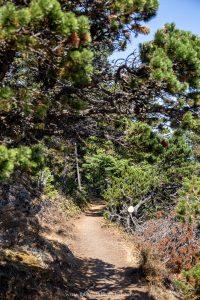 A narrow, nature hiking trail on Orcas Island in Washington