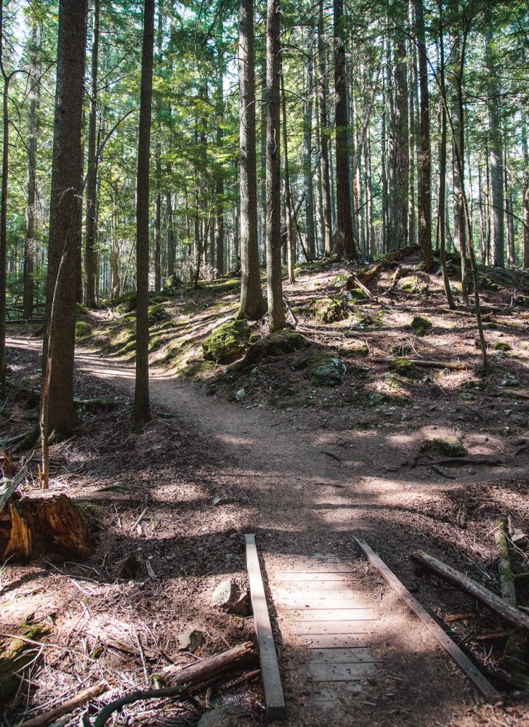 The narrow, nature hiking trails in Moran State Park on Orcas Island off the coast of Washington State